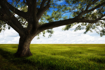 Big tree and Green meadow with beautiful blue sky background