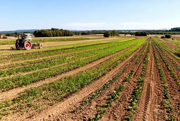 Großflächiger Anbau verschiedener Salatpflanzen. Ökologischer Landbau in Deutschland - Salatanbau im großen Stil.