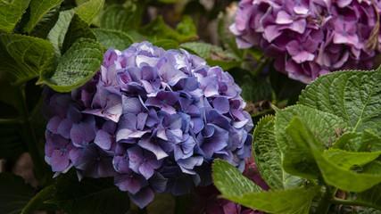 Nice purple flowers