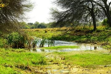 laguna de Campo