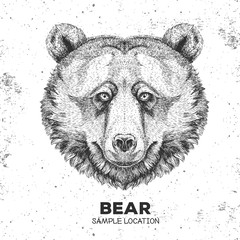 Hipster animal bear. Hand drawing Muzzle of animal bear