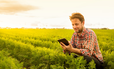 Farmer working on (using) tablet in front of carrot field