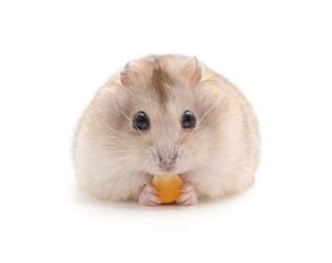 Hamster that eats.
