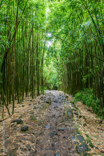 Bamboo Forest Trail Stock Photo And Royalty Free Images On Fotolia