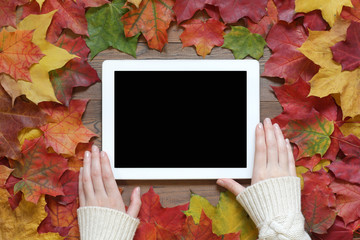 Female hands in a sweater use the tablet on a table with autumn leaves. Top view