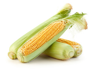 Wall Mural - corn isolated on white background