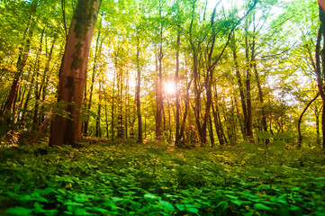 Traumhafter Wald Freilichtmuseum Detmold
