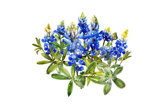 watercolor bluebonnets wildflowers design