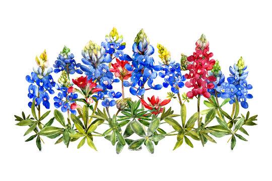 watercolor bluebonnets wildflower bunch