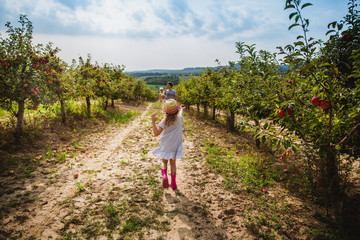 The girl in hat runs with sweet apple to her father and little sister in the apple orchard