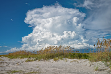 Sea oats in front of the cumulus cloud