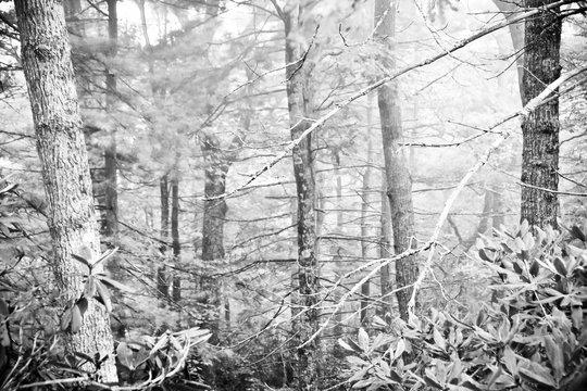 Monochrome Forest