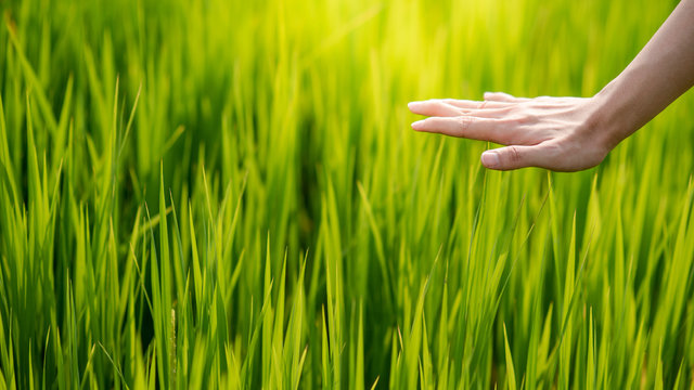 Male hand touching on green field. Nature therapy or eco friendly concept. Agriculture and environment background