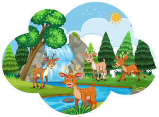 River scene with deers