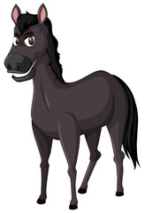 A black horse on white background