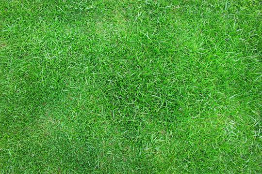 Top view manila grass ,Natural green patterns background