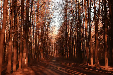 Photo sur Aluminium Rouge mauve landscape autumn rays of the sun / beautiful landscape nature of Indian summer, yellow forest and sun