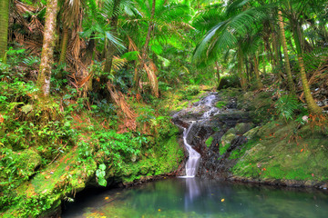 Self adhesive Wall Murals Caribbean Small cascade in El Yunque national forest, Puerto Rico