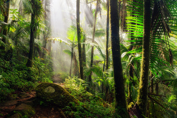 Spoed Fotobehang Caraïben Beautiful jungle path through the El Yunque national forest in Puerto Rico