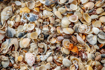 Sea shells, background and texture