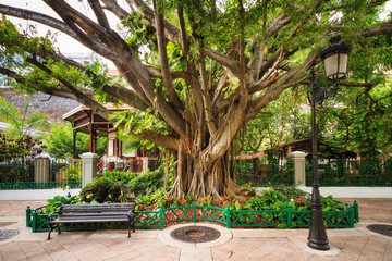 Urban cityscape of old San Juan, Puerto Rico, with an ancient tree, a lantern and a bench  Fotomurales