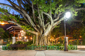 Urban cityscape of old San Juan, Puerto Rico, with an ancient tree, a lantern and a bench, at night