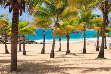 Recess Fitting Caribbean Beautiful tropical palm trees at popular touristic Condado beach in San Juan, Puerto Rico