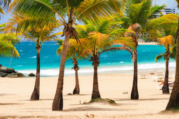 Beautiful tropical palm trees at popular touristic Condado beach in San Juan, Puerto Rico Fotoväggar