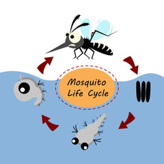 mosquito life cycle concept. vector illustration.