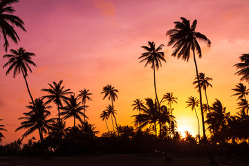 Amazing vibrant sunset at the beach with silhouettes of palm trees in Puerto Rico