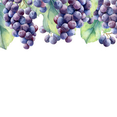 Fototapete - watercolor grapes branch on white background