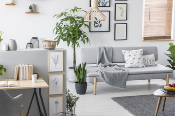 Plants in a grey living room interior with a sofa, art collection and desk. Real photo