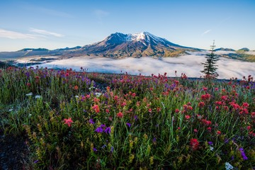 Mount St Helens in Summer Wall mural
