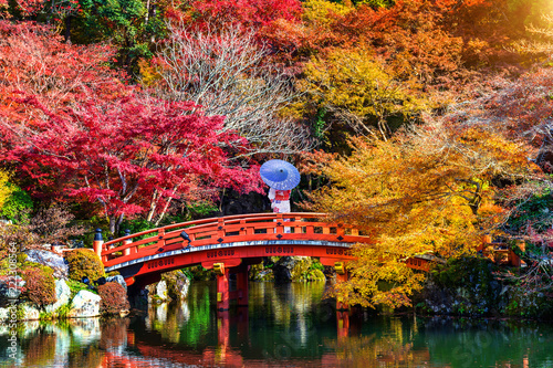 Wall mural Asian woman wearing japanese traditional kimono in autumn park. Japan