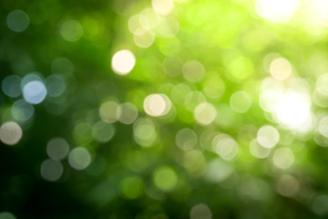 Sunny abstract green nature background, Blur park with bokeh light , nature, garden, spring and...