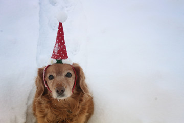 Christmas and New Year background- a yellow dog in christmas hat