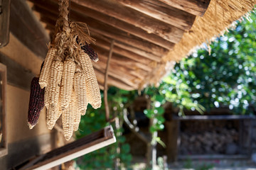 Drying Corn Use Korean Style With Hang