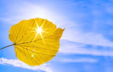 Close up shot of yellow autumn leaf with sun rays shining through it at blue sky background. Hello autumn concept. Copy space