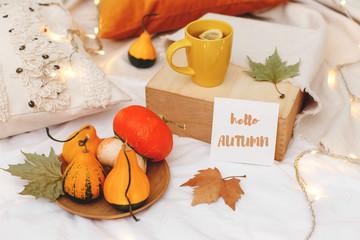 Orange pumpkins, wooden tray, cup of tea, dry leaves, beige plaid, pillows, glowing garland lights and card with text HELLO AUTUMN on bed with white linen. Home cozy fall decor.
