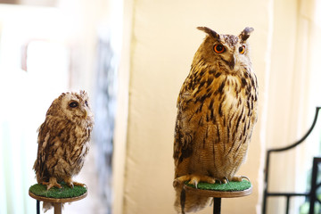 wild owl and filin close up photo as ttraction on kids birthday party