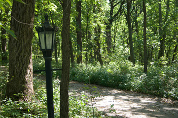 Forest with Lamp Post