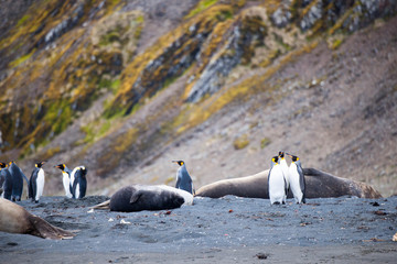 Beautiful shots of cute penguins playing and lounging in Antarctica