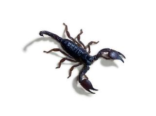 Close up of scorpion