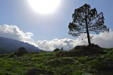 Plaine montagneuse à contre jour