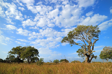 African savannah landscape with trees in grassland with a cloudy sky, South Africa.