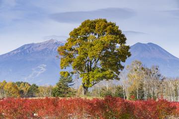 秋の木曽馬と里と御嶽山