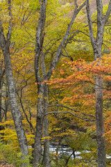 紅葉の風景