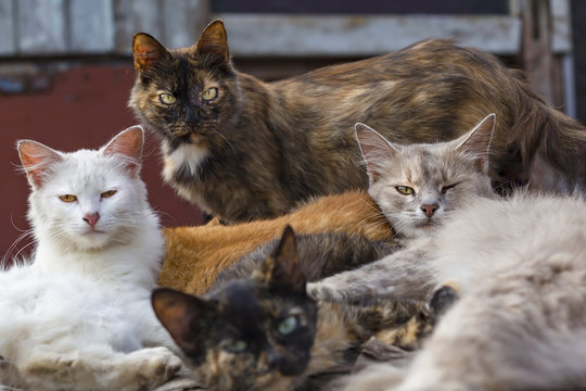 flock of stray cats lying on the street
