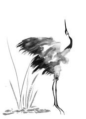 Japanese crane bird drawing.  Watercolor and ink illustration in style sumi-e, u-sin, go-hua Oriental traditional painting. Isolated .