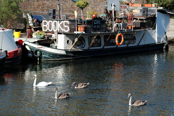 Swans swim past Word On The Water, a floating bookshop on the Regent's Canal, Kings Cross, London